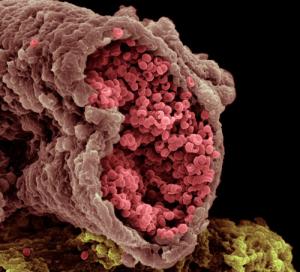 Человеческий организм под микроскопом