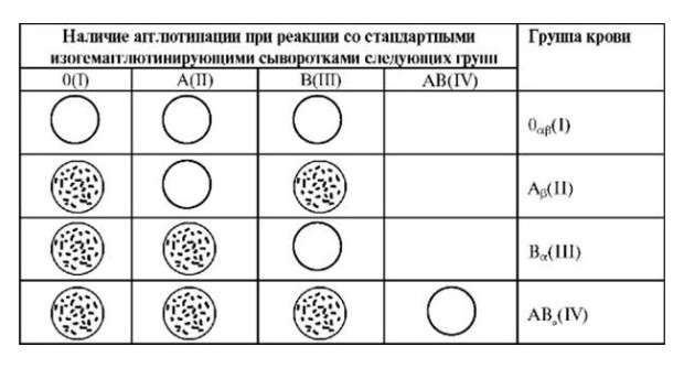 Проведение исследования групп крови