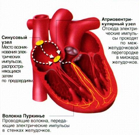Горизонтальное положение электрической оси сердца расшифровка