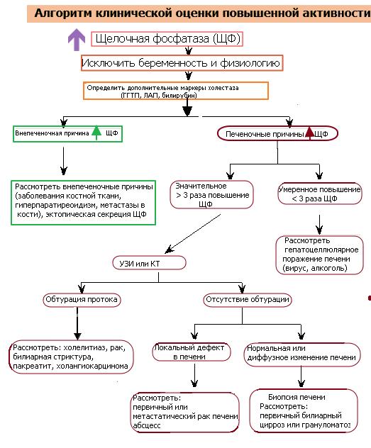 Щелочная фосфатаза лечение