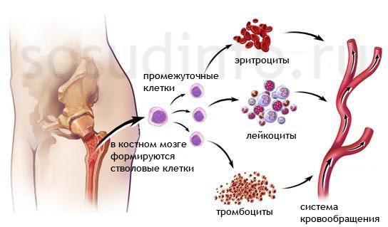 Что такое лейкопения
