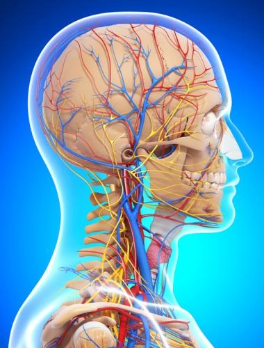 Какие симптомы при сужении сосудов головного мозга